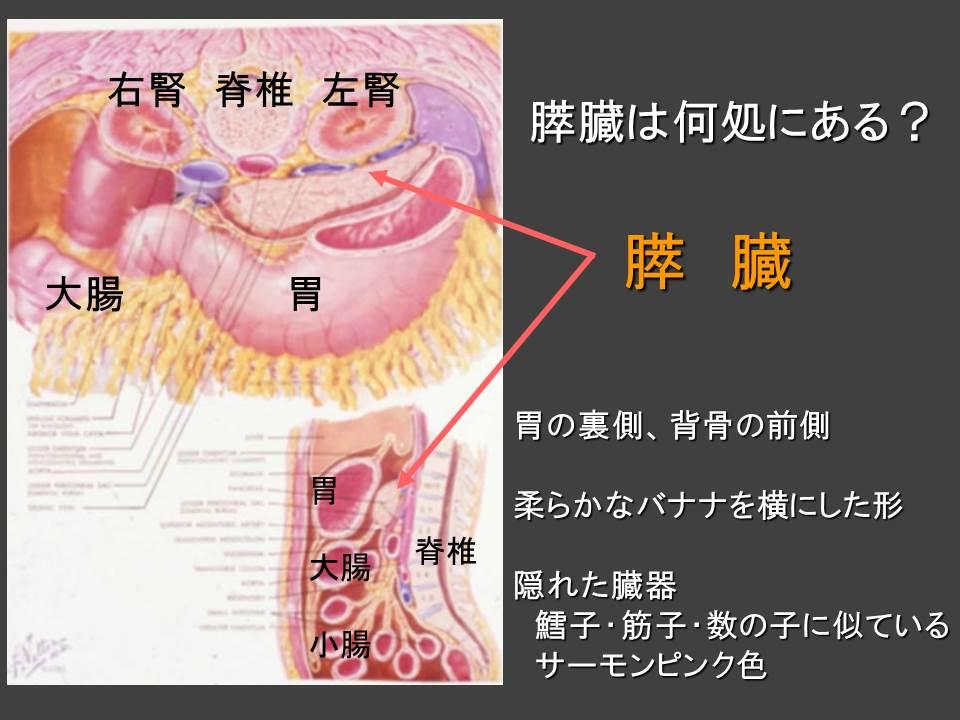 膵臓 位置